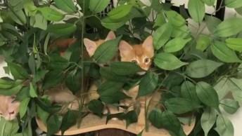 Arvore De Gatinhos, Eles Estão Parecendo Umas Plantinhas, Confira!