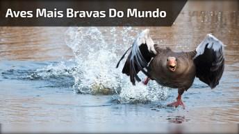 As Aves Mais Bravas Do Mundo, Elas Enfrentam Qualquer Pessoa!