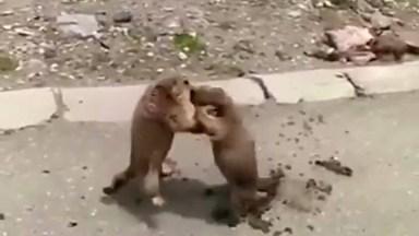 As Brigas Mais Fofas Que Você Já Viu, Como Os Animais São Engraçados!