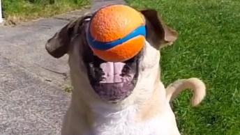 As Coisas Mais Engraçadas Que Os Cachorros Fazem No Dia A Dia!