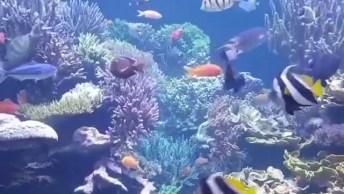 As Maravilhas Que Se Encontram No Fundo Do Mar! A Natureza É Fantástica!