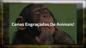 Assista Cenas Engraçadas No Mundo Dos Animais, É Para Rir Muito!