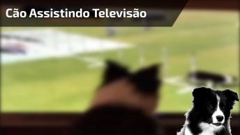 Assistindo Apresentação De Cachorro Na Televisão E Com Vontade De Participar!