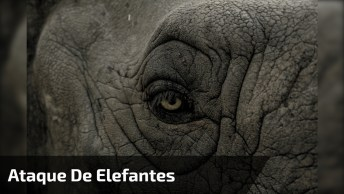 Ataque De Elefantes, Não Tire Esse Animal Do Sério, Pode Ser Perigoso!