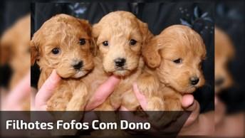 Ataque De Fofura, Veja Estes Filhotes Recebendo Seu Dono, Que Fofos!