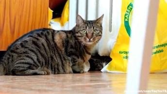 Ataque De Gatos, Veja Como Eles Se Comportam De Maneira Engraçada!