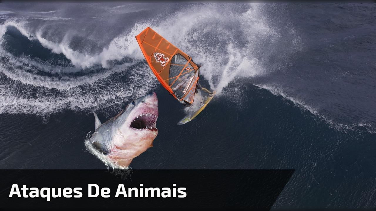 Ataques de animais a humanos, um vídeo muito assustador, confira!!!