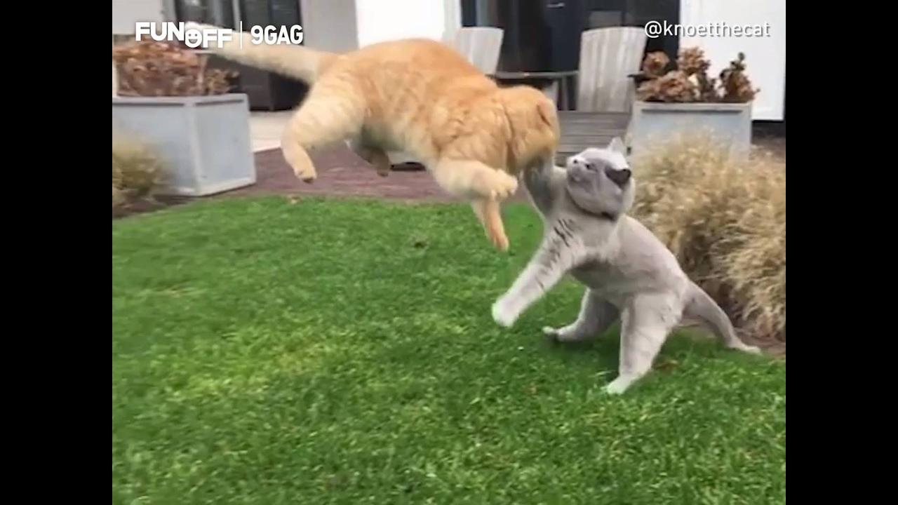Ataques ninja dos gatinhos mais fofos que você vai ver hoje
