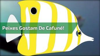 Até Os Peixes Gostam De Cafuné! Veja Só Que Vídeo Incrível!