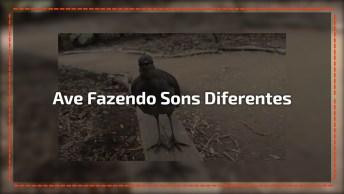Ave Fazendo Os Sons Mais Diferentes Que Você Já Viu, Olha Só Que Incrível!