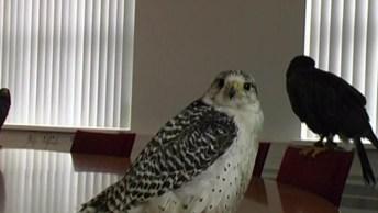 Aves De Rapina, Os Pássaros Mais Lindos E Misteriosos Do Universo!
