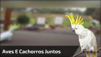 Aves E Cachorros - Um Vídeo Para Dar Muitas Risadas Hahaha!