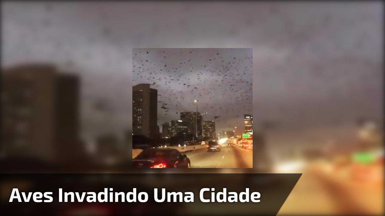 Aves invadindo uma cidade