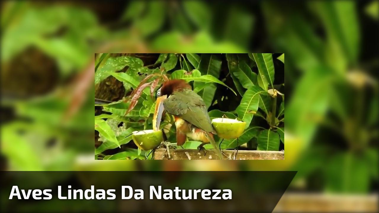 Aves lindas da natureza