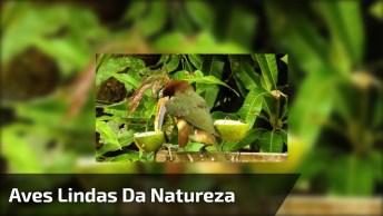 Aves Lindas Da Natureza, Elas São As Belezas Que Completam O Ambiente!