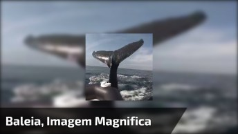 Baleia Bate Sua Calda E Bote, Olha Só Que Imagem Magnifica!