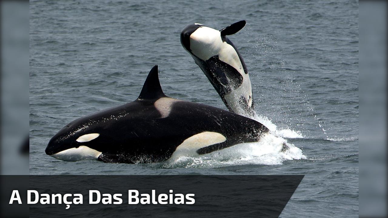 A dança das baleias