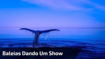 Baleias Dando Um Show De Dança No Mar, Olha Só Que Imagens Maravilhosas!