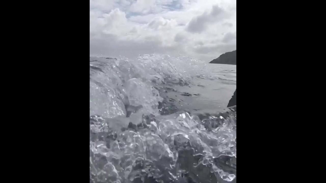 Baleias passando bem perto do barco