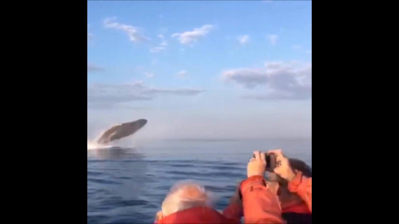 Baleias próximas ao pequeno barco em alto mar