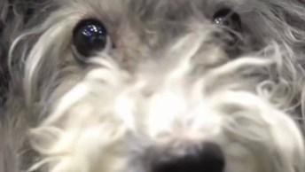 Banho E Tosa De Um Cachorrinho Super Fofo, Veja Que Lindo Antes E Depois!