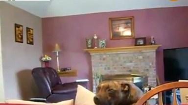 Barulhos Super Engraçados De Cães, Impossível Não Dar Risadas!