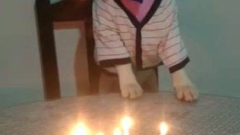 Beagle Comemorando Seus 7 Anos, Olha Só A Alegria Deles Que Fofo!