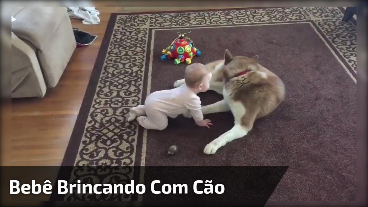 Bebê brincando com cão
