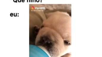 Bebê Cachorrinho Mamando Na Mamadeira, Um Filhinho De Quatro Patas!