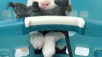 Bebê Cachorro Mais Fofo Do Dia, Veja Quanta Fofurinha Em Um Só Vídeo!