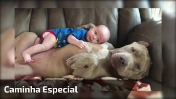 Bebê Deitado Em Cima De Um Cachorro, E O Cachorro Ainda Lambe Ele!