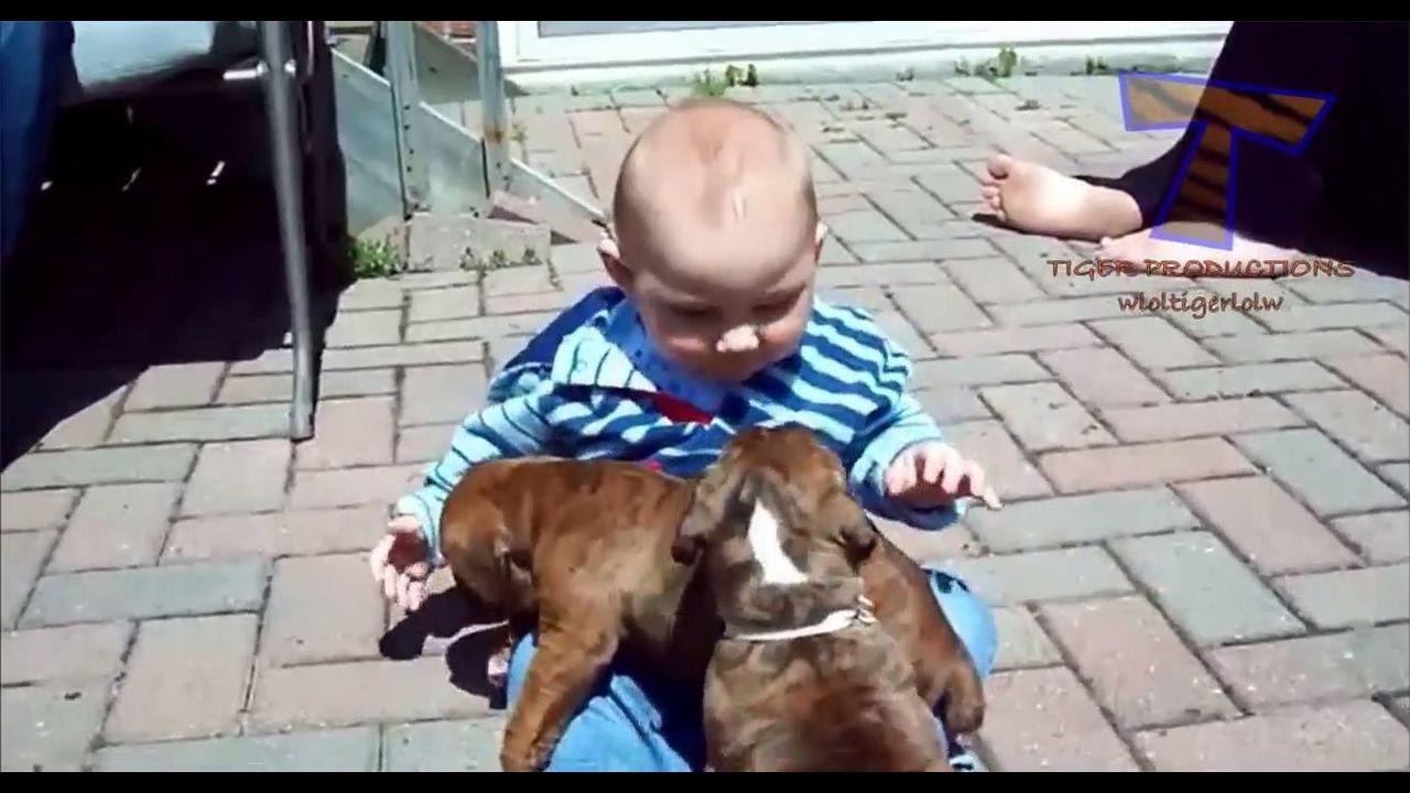 Bebê e filhotes de cachorros distribuindo lambeijos