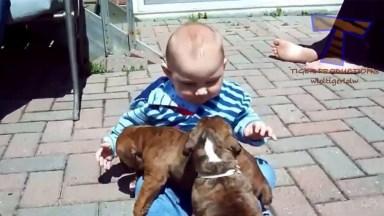 Bebê E Filhotes De Cachorros Distribuindo Lambeijos, Uma Fofura!