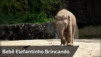 Bebê Elefantinho Brincando Com Uma Mulher, Veja Que Fofura!