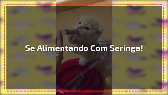 Bebê Gatinha Mamando Em Seringas, Que Coisa Mais Fofinha Gente, Confira!