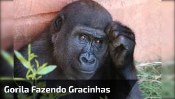 Bebê Gorila Fazendo Gracinhas Para Visitantes De Zoológicos!