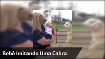 Bebê Imitando Uma Cabra, Ou Uma Cabra Imitando Um Bebê? Confira!