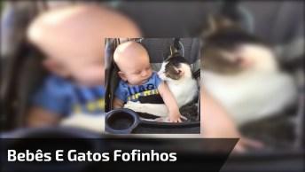 Bebês E Gatos, Uma Dupla Que Vai Te Conquistar, Confira!