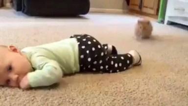 Bebês Gatos E Bebês Humanos, Uma Dupla Que Nos Faz Dar Risadas!
