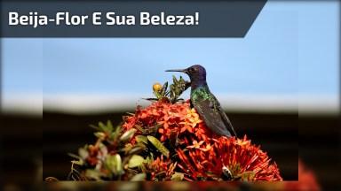Beija-Flor Se Alimentando Do Néctar Das Flores Desta Arvora, Uma Linda Imagem!