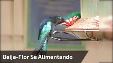 Beija-Flor Se Alimentando, Olha Só A Quantidade De Animaizinhos!