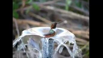 Beija-Flor Tomando Banho, Como Deus É Perfeito Em Toda Sua Criação!