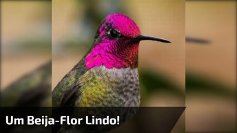Beija-Flor Um Dos Mais Pequenos E Belos Animais Da Natureza!
