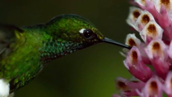 Beija-Flor Uma Das Aves Mais Belas, Vale A Pena Conferir Esta Linda História!