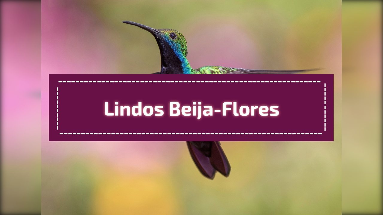 Lindos Beija-flores