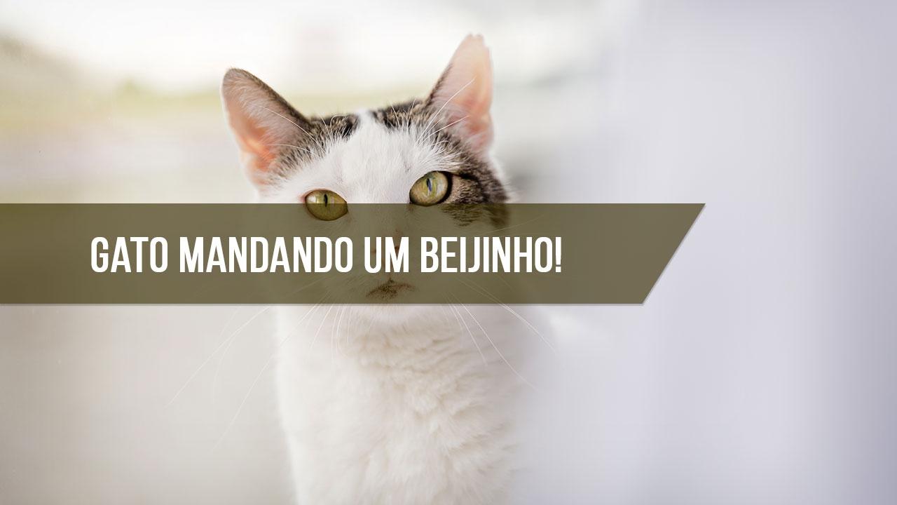 Beijo de gato para enviar pelo Whatsapp