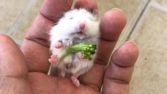 Bichinho Minúsculo, Capar De Dormir Na Mão, Confira E Compartilhe!