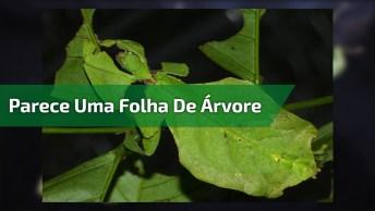 Bicho Folha, Veja Como Ele Realmente Parece Uma Folha De Árvore!