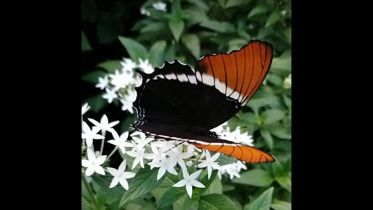 Borboleta tomando néctar da flor, é lindo observar a vida em nossa natureza!!!