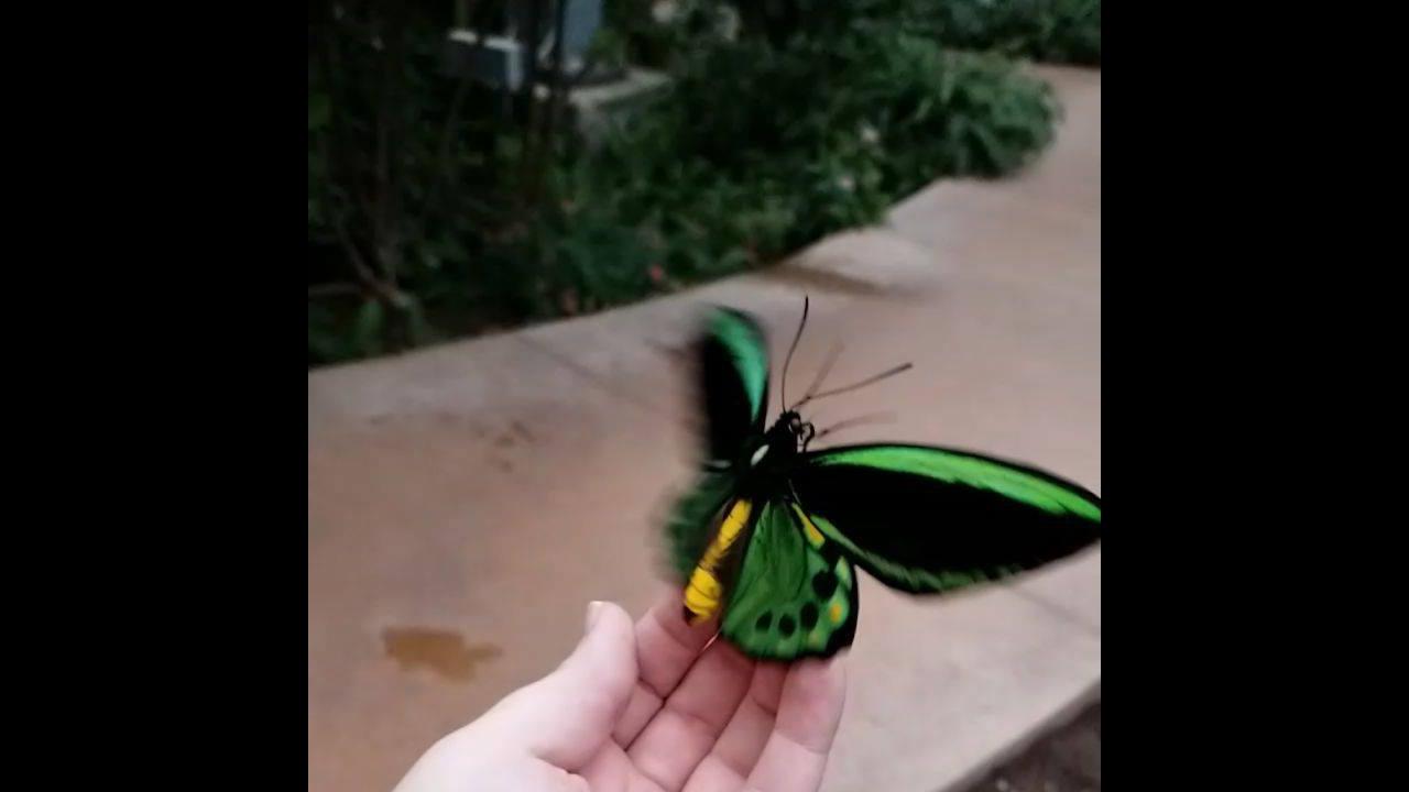 Borboleta verde voando, mais um lindo video para postar no Facebook!
